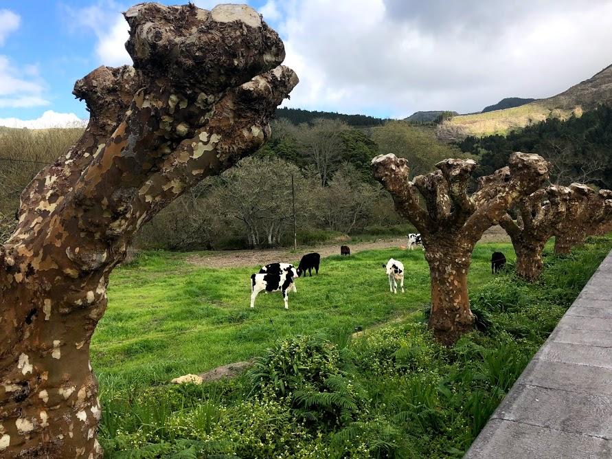 Agora Nós os Três Açores 35
